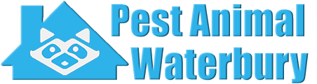 Waterbury Wildlife and Animal Removal